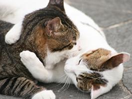 Cute-Cats-Hugging